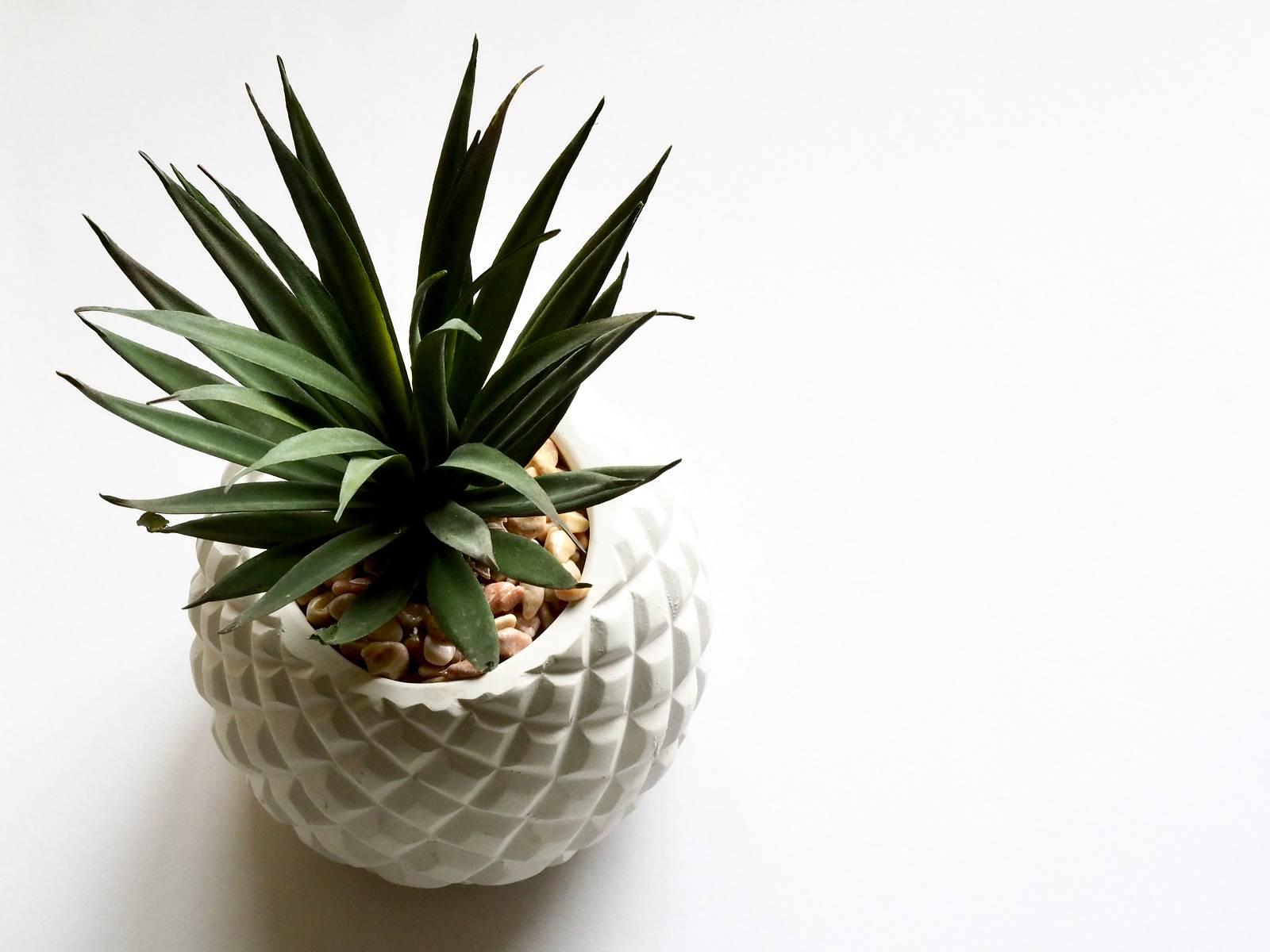 Evrgreen 003 - Zimmerpflanzen bei Evrgreen kaufen?